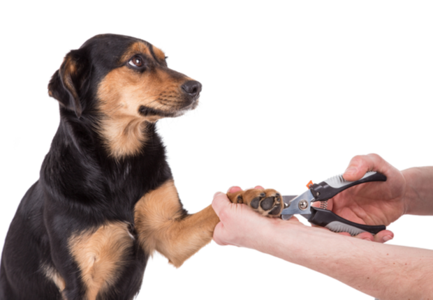 Best Nail Clipping services near me