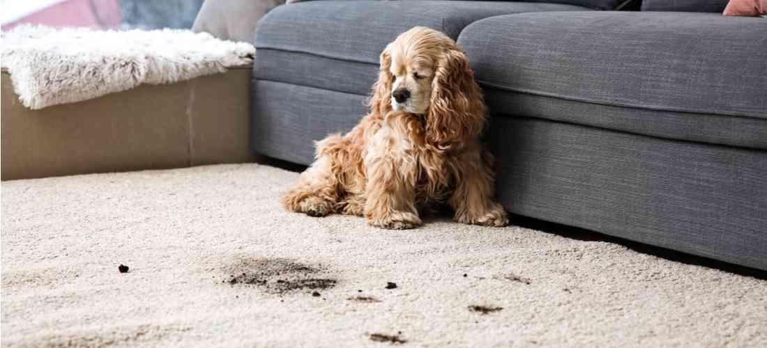 more about Pet Care Services